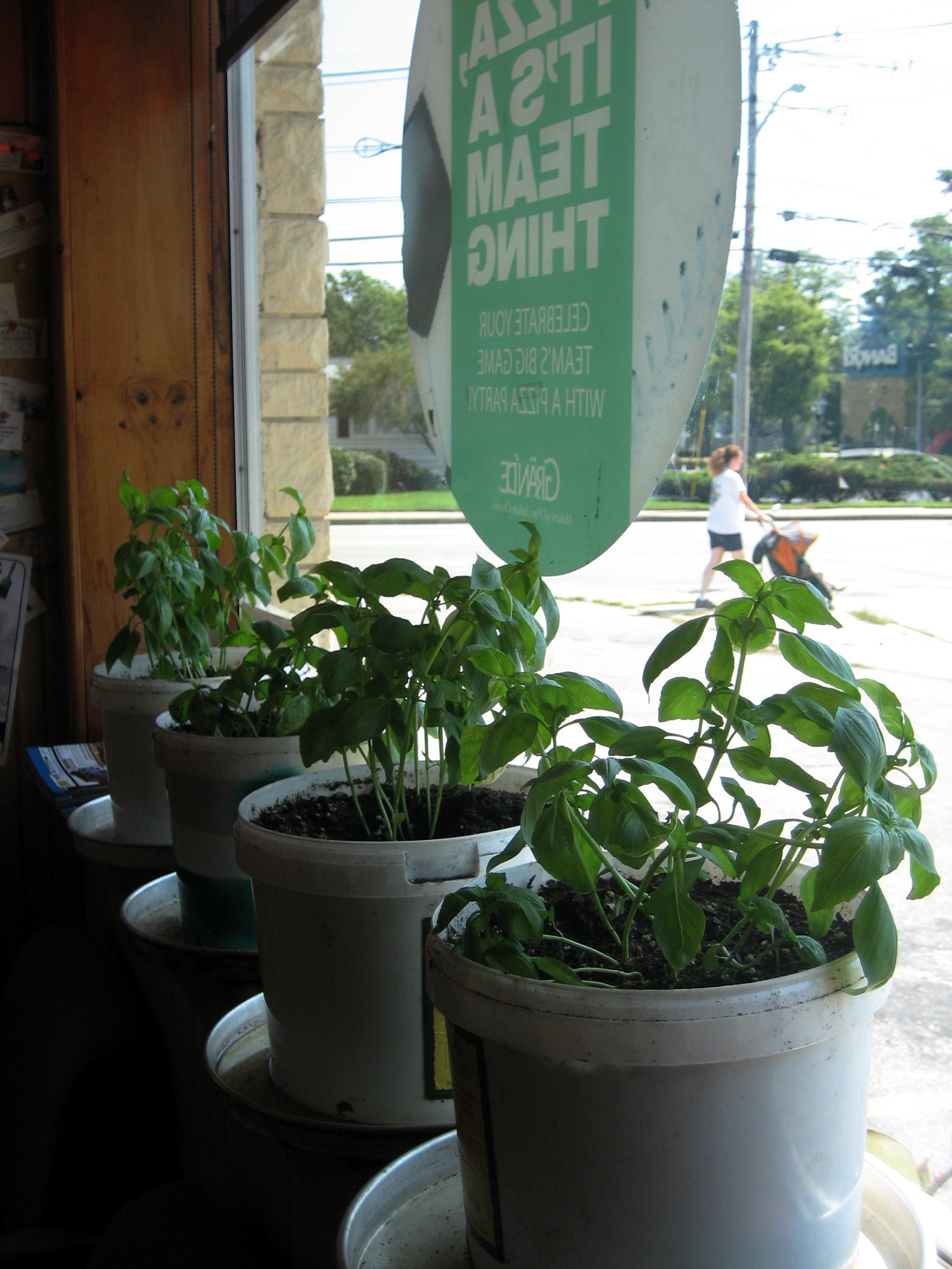 How much is that basil in the window? Sorry, the song was floating out there, and I just had to grab it.
